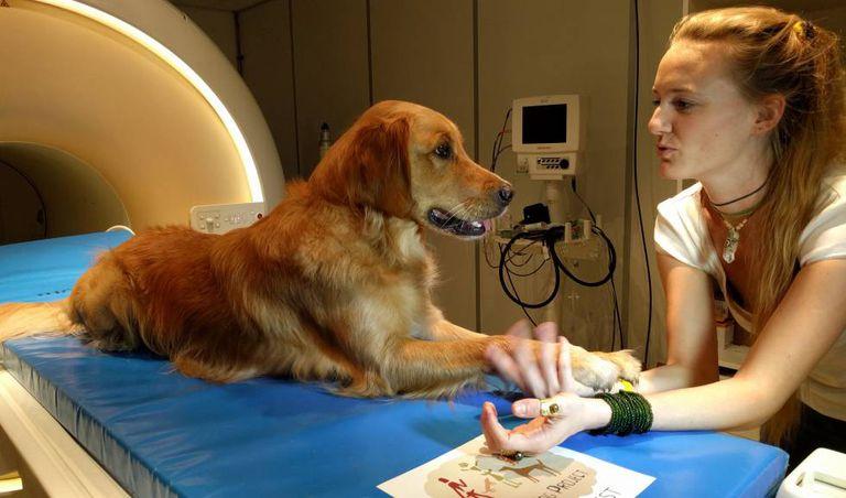 Um dos cães junto a uma das pesquisadoras durante o estudo.