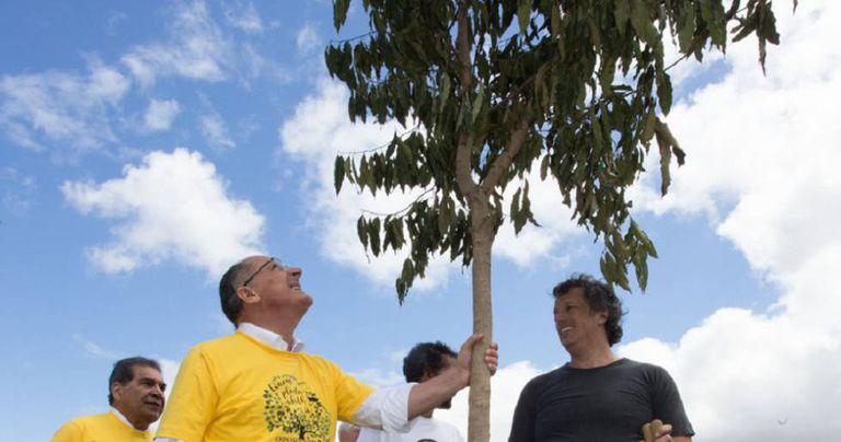 O Governador de São Paulo, Geraldo Alckmin, observa muda da árvore plantada no Pomar Urbano