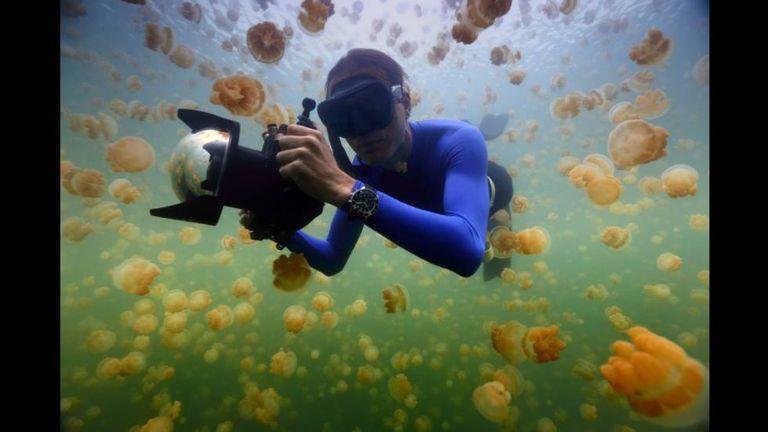 O ecologista marinho Enric Sala, no Lago das Medusas, em Palau