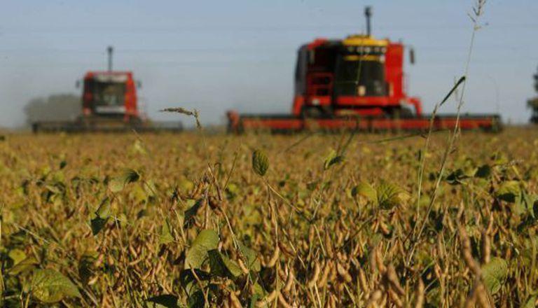 Plantação de soja em Olivera, na Argentina.