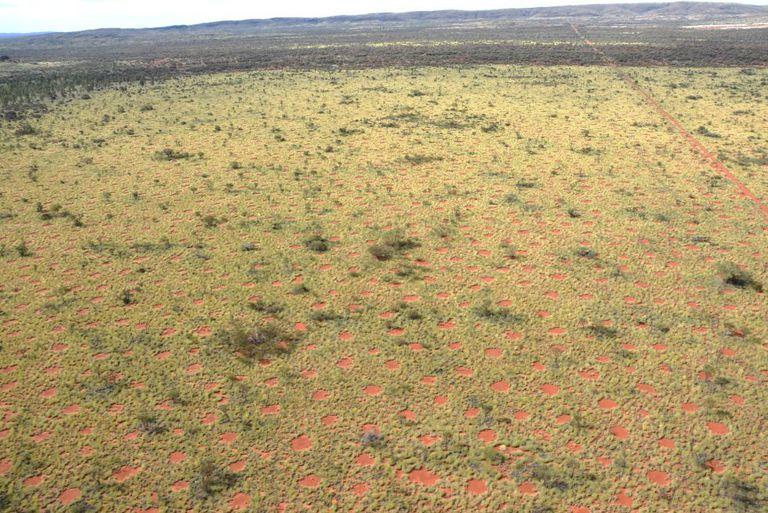 Centenas de círculos foram descobertos no deserto da Austrália.