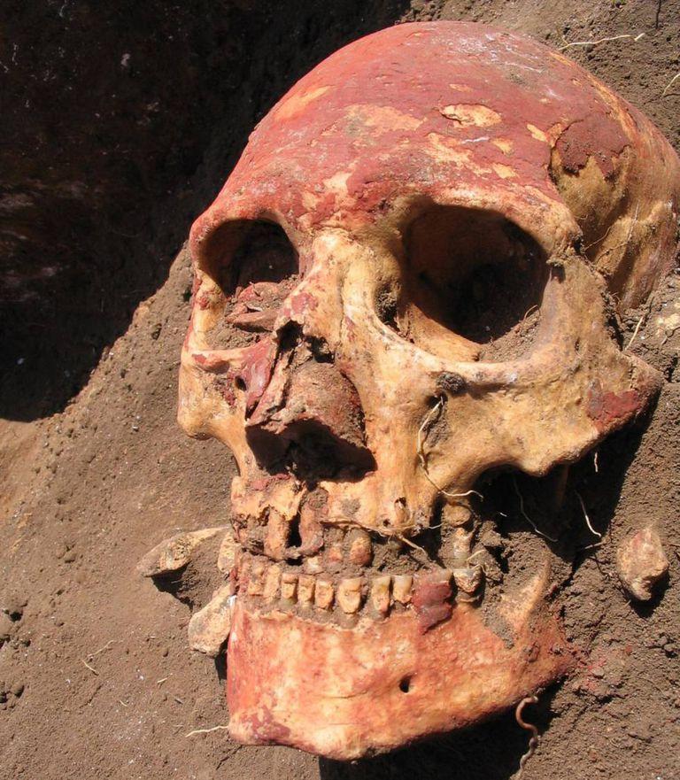 Crânio retirado de tumba da cultura yamnaya, pintado de ocre vermelho.