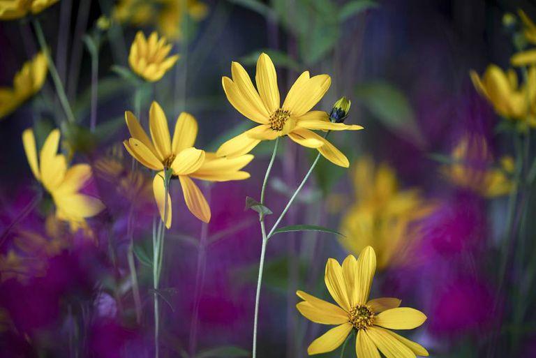 Jardim de flores na Inglaterra, durante um evento dedicado a floristas e jardineiros em setembro.