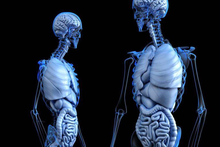 O interstício se encontra no revestimento de muitos órgãos.