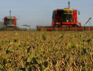 Plantação de soja na localidade de Olivera, Argentina.
