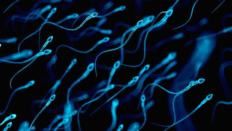 Espermatozoides 'lutam' para fecundar os óvulos