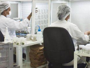 Pesquisadores no laboratório de biotecnologia do CETENE.