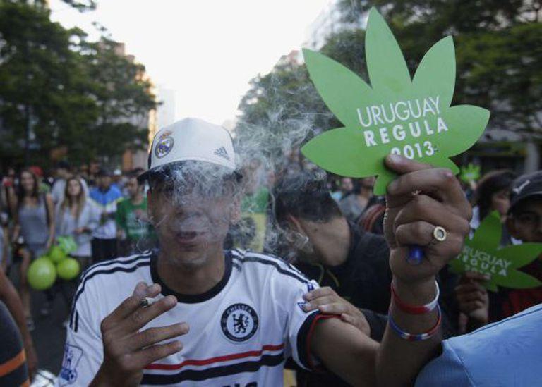 Homem celebra a legalização da maconha no Uruguai.