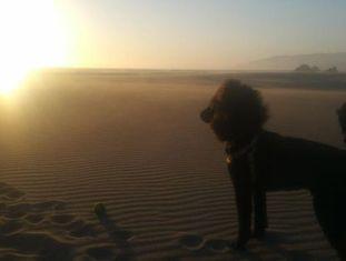 Kahlo na praia de Ocean Beach.