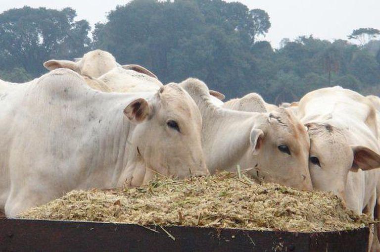 Obama assinou acordos para liberar as exportações de carne brasileira.