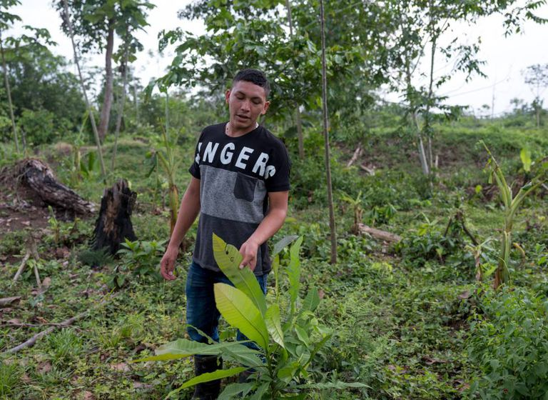 Ramón Bedoya nas terras da sua família (Colômbia).