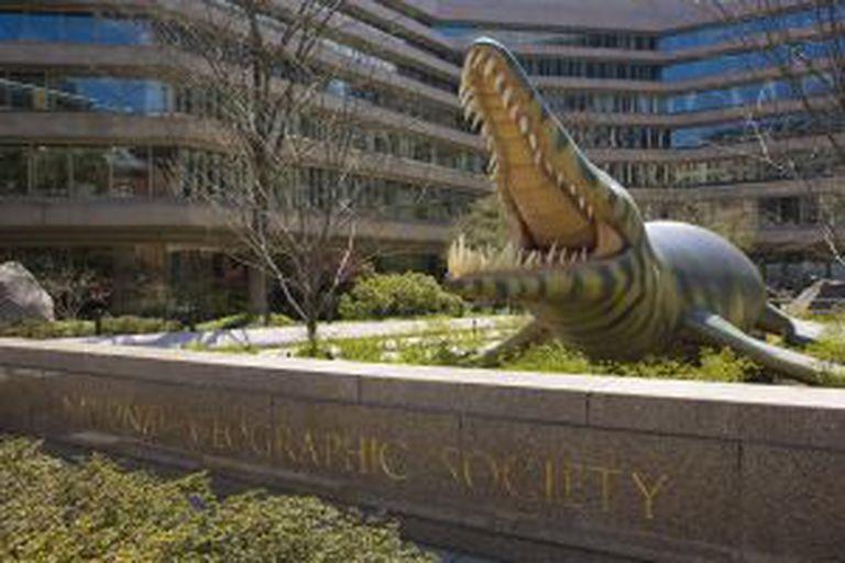 Uma réplica de um cocodrilo prehistórico na sede principal da National Geographic Society, em Washington (EUA).