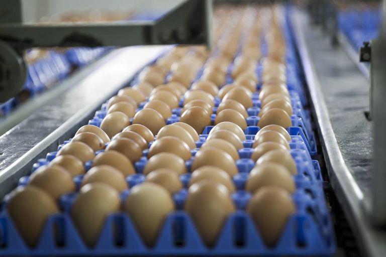 Um ovo grande contém 185 mg de colesterol.