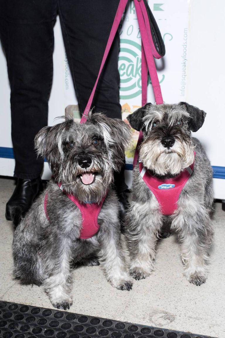Fundadores da alfaiataria Caninetto com suas cadelas. Elas experimentam as suas criações, para ver se são confortáveis