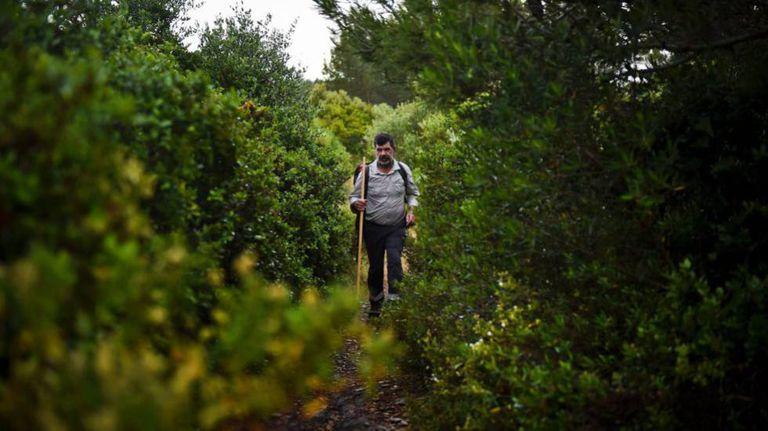 Carlos Gil caminha por uma etapa da trilha entre Lisboa e Fátima, em Portugal.