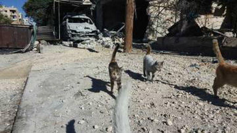 Na imagem, fornecida por Mohamed Alaa, vê-se a destruição do refúgio de gatos que Alaa mantinha em Hanano