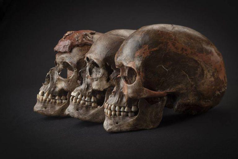 Três crânios encontrados na República Checa associados com o período gravetiano.