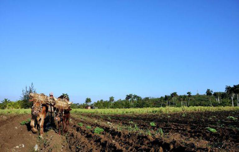 Agricultor em lavoura no Brasil.