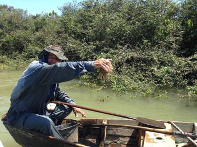 Pescador mostra camarão-branco: Parnaíba é fonte de sustento da população da região.