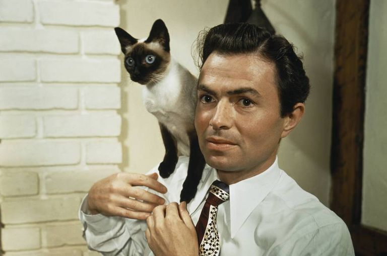 James Mason, protagonista de Lolita (Stanley Kubrick, 1962) posa com um gato siamês.