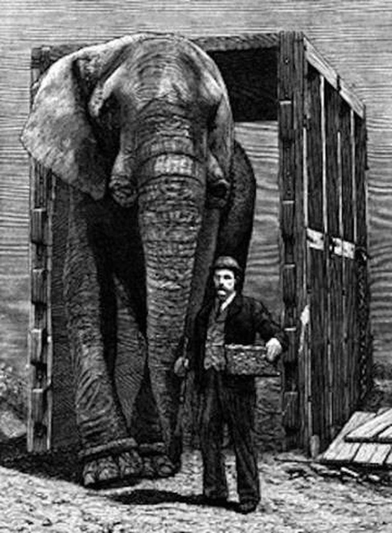 Jumbo, com o único ser humano que o entendeu: seu cuidador, Matthew Scott. A imagem é de 1885, ano da morte do elefante.