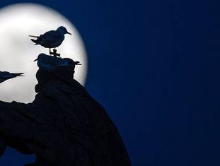 Vista da lua cheia em Praga.