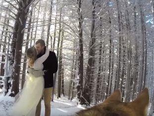 Ryder, um husky siberiano, gravou com uma câmera GoPro tudo o que aconteceu na cerimônia, e seus donos postaram no YouTube