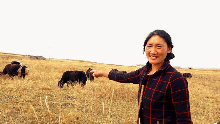 A nômade tibetana Tsewang Zanmo mostra seu rebanho de iaques.