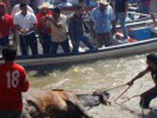 Em um município de Veracruz, fazem os animais atravessarem um rio para espancá-los na margem como parte de uma festa religiosa
