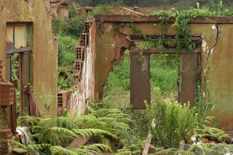 Um ano após a tragédia, o verde ressurge no povoado fantasma de Bento Rodrigues.