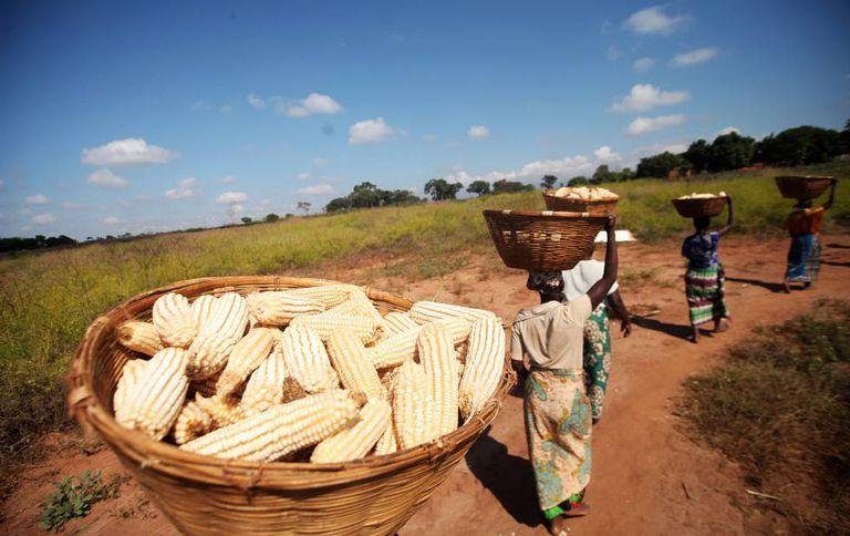 Agricultores moçambicanos levam milho para processar em sua aldeia.