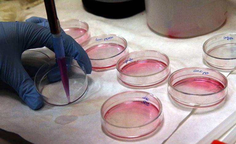 Cultivo de células em laboratório.