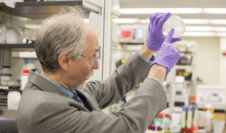 Jeff Boeke com o cultivo de leveduras sintéticas.