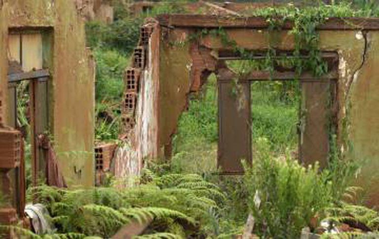 Em meio a um labirinto marrom de ruínas, o verde ressurge em Bento Rodrigues.