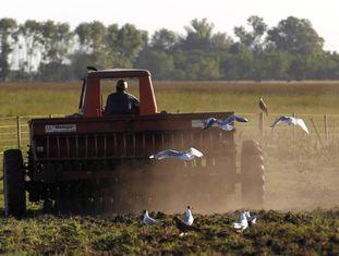 Agricultor conduz um trator em uma plantação de sorgo na província de Buenos Aires.