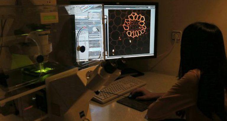 Análise das imagens de um microscópio.