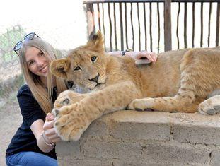 Garota posa com um filhote de leão na África do Sul.
