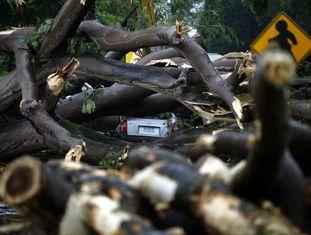 Árvore caída sobre um veículo depois da passagem da tempestade Otto.