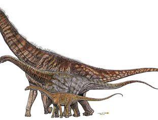 Comparação entre dinossauros brasileiros, de menor a maior: Gondwanatitan faustoi (8 metros), Maxakalisaurus topai (13 metros) e Austroposeidon magnificus (25 metros).