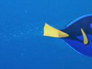 Sequência de 'Procurando Nemo' estreia no Brasil em 16 de junho de 2016. A protagonista, desta vez, é a esquecida  peixinha