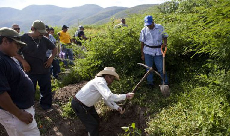 Moradores de Guerrero procuram covas.