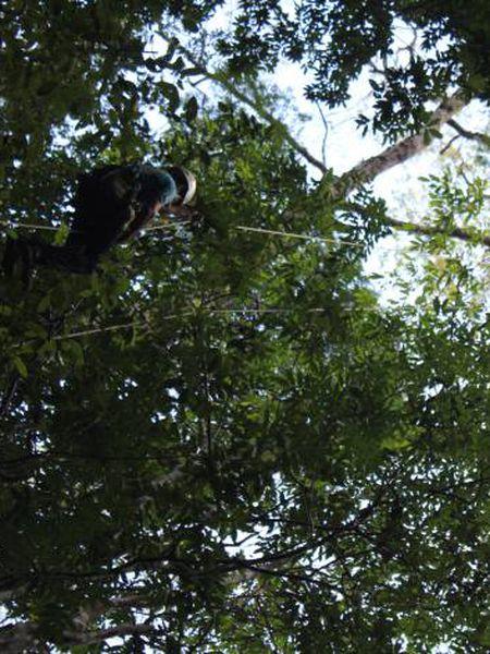No alto de um gigante da Amazônia.