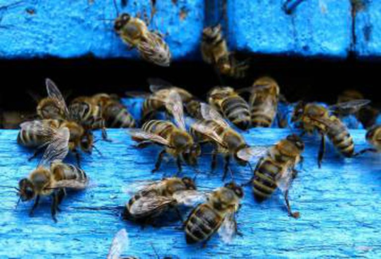 O catálogo nacional de espécies ameaçadas inclui apenas 90 invertebrados, dos quais 35 são insetos e somente 17 têm uma categoria de ameaça que permite a ativação de planos de recuperação.