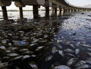 Em fevereiro de 2015, milhares de peixes foram achados mortos na Baia de Guanabara.