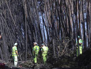 Funcionários municipais cortam árvores carbonizadas entre Avelar e Pedrógão Grande.