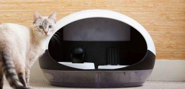 O dispenser inteligente de alimento para gatos