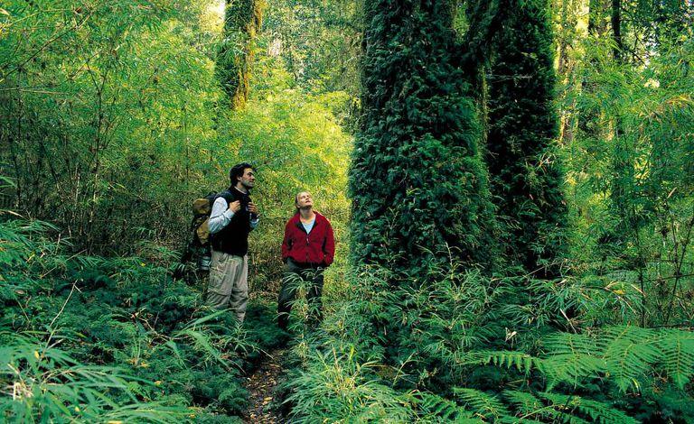 O caminho do Alerce, no Parque Nacional Pumalín, no Chile.