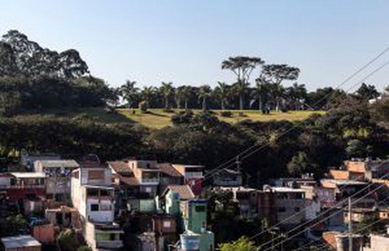 Cerejeiras, no alto de uma colina no Jardim Ângela.