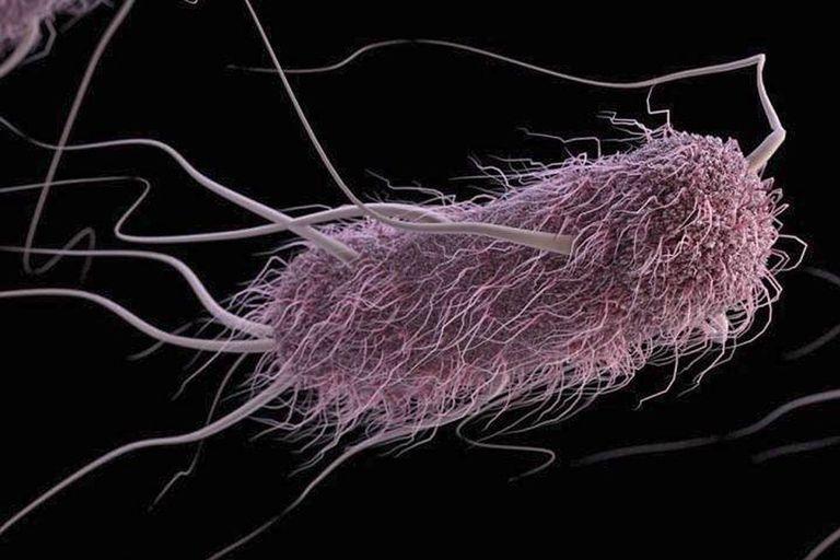 Uma bactéria escherichia coli.